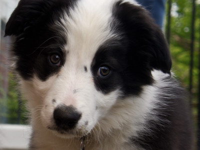 puppy home visit