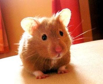 hamster home care visit